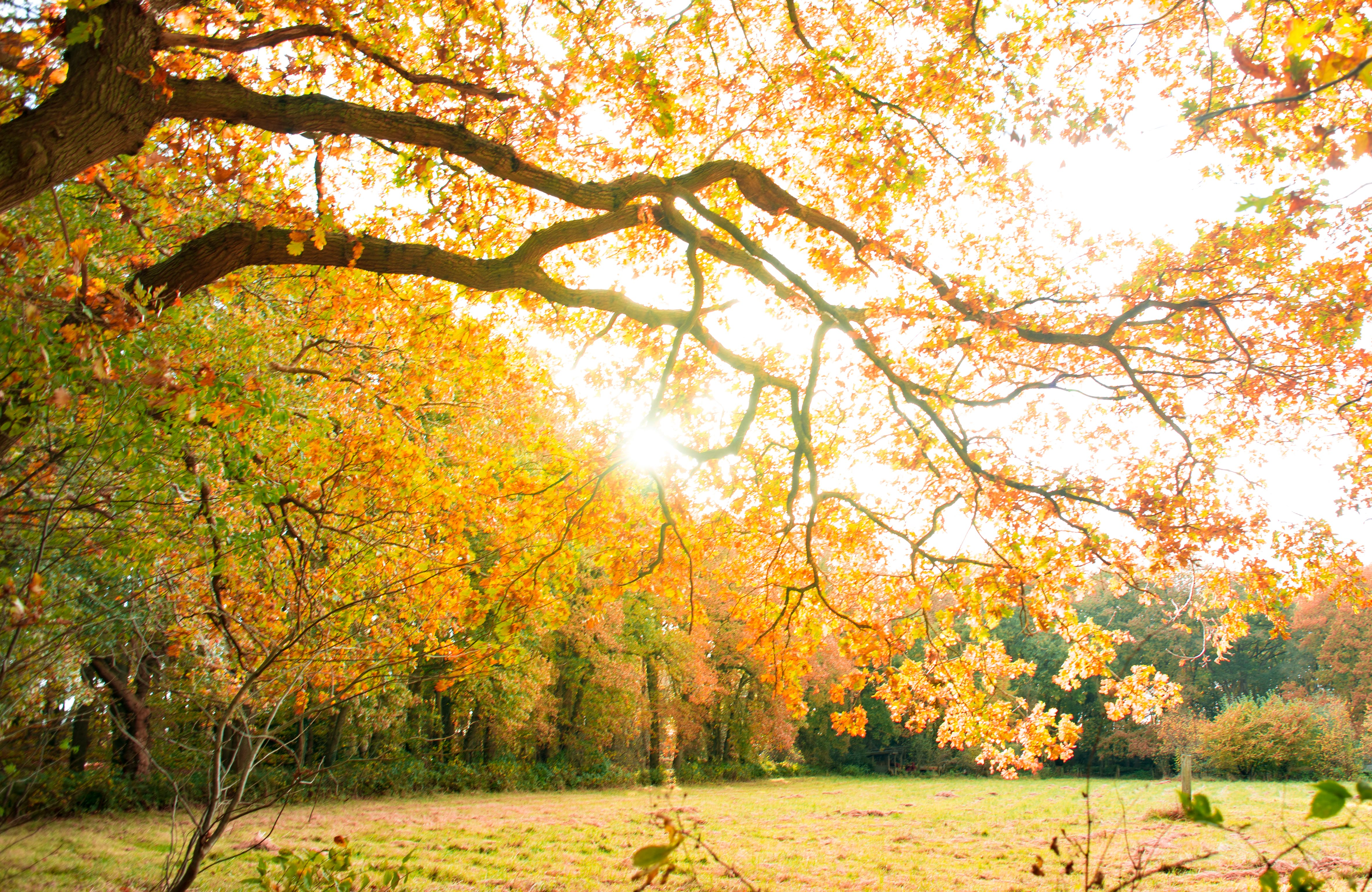 Yellow Leaves Tree on a Park