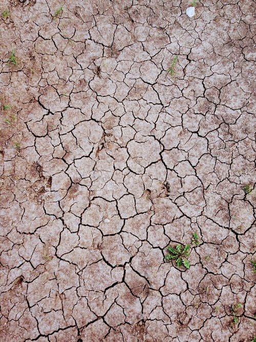 Textured background of dry land with small plants