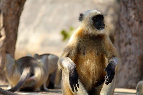 Безкоштовне стокове фото на тему «тварина, фотографія дикої природи»