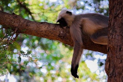 Безкоштовне стокове фото на тему «дерево, момент, спальний, тварина»