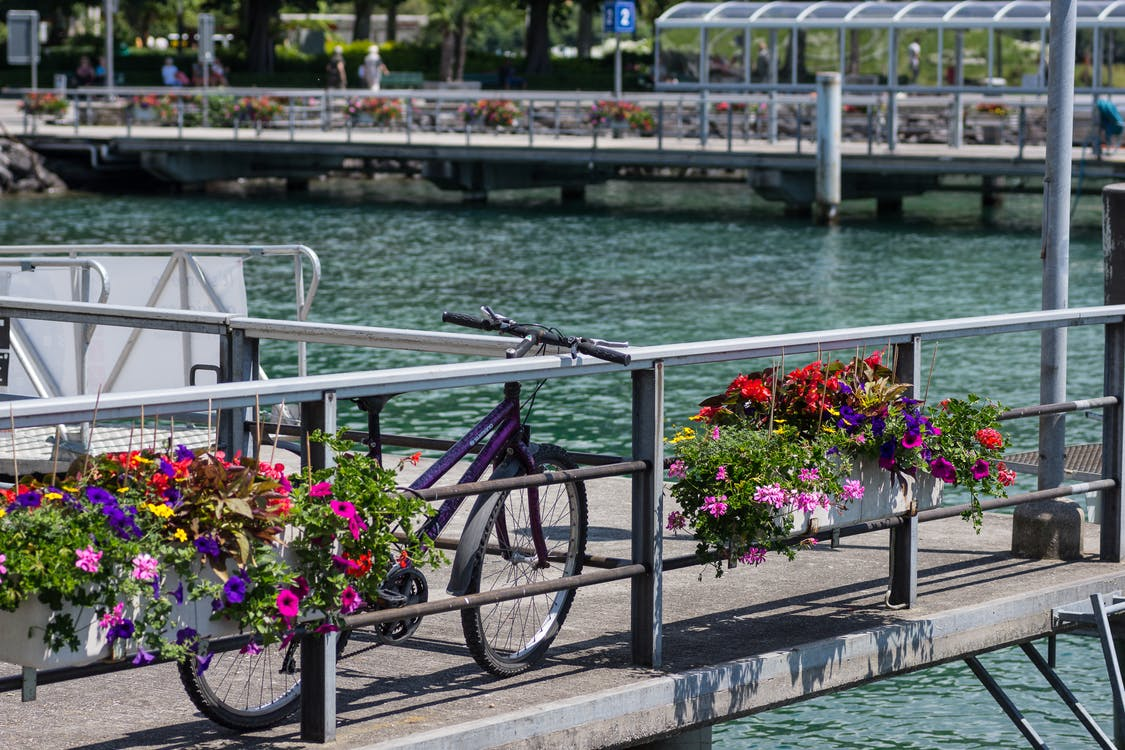 Free stock photo of bycicle, colorful, flowers