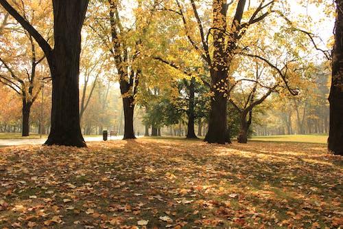 Kostnadsfri bild av budapest, fallna löv, stadspark, torkade löv