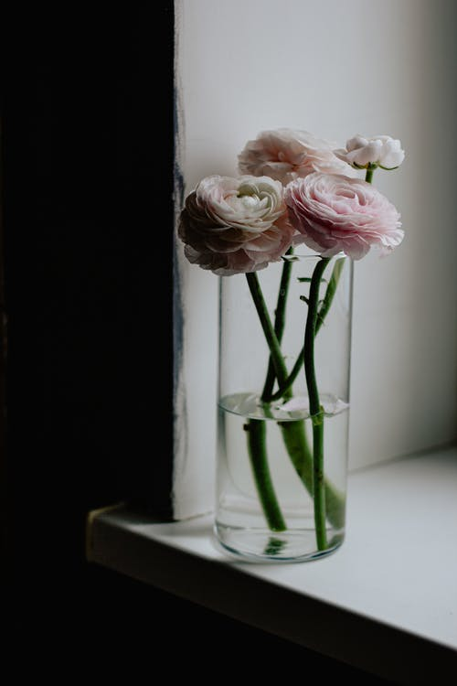 Pink Roses in Clear Glass Vase