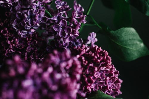 Purple Flower Buds in Close Up Photography
