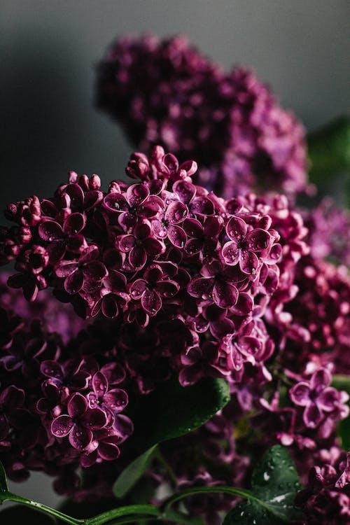 Delicate lilac flowers in dark room