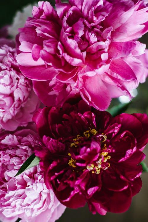Kostenloses Stock Foto zu aromatisch, aufsicht, blühen