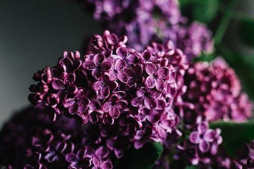 Delicate lilac flowers blooming in dark studio
