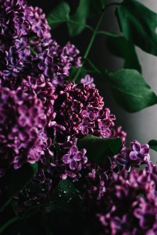 Kostenloses Stock Foto zu aroma, aromatisch, ast