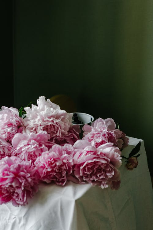 Fresh flowers of delicate peonies in blossom placed on table with white tablecloth