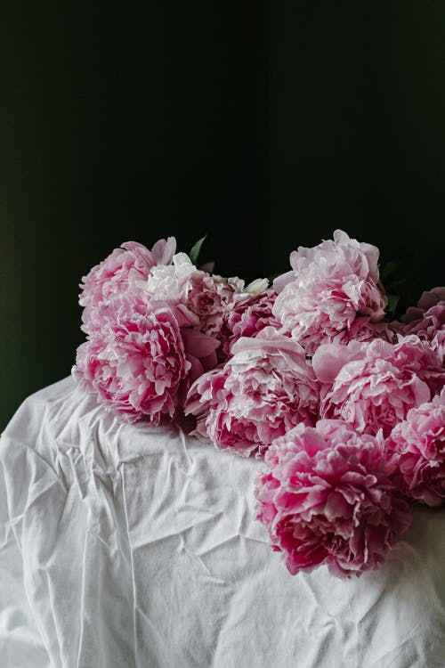 Pink delicate flowers of peony composed on table with white crumpled tablecloth on black background