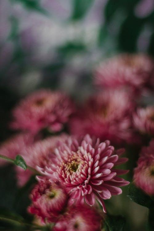 Photos gratuites de angle élevé, arôme, art floral