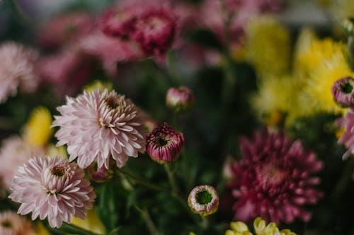Photos gratuites de 8 mars, angle élevé, aromatique