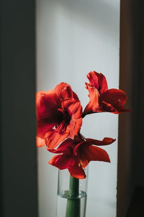 優雅, 夏天, 夏季, 室內 的 免費圖庫相片