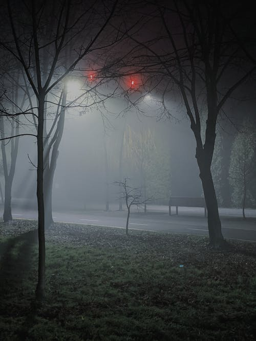 Free stock photo of branch, dark, dawn