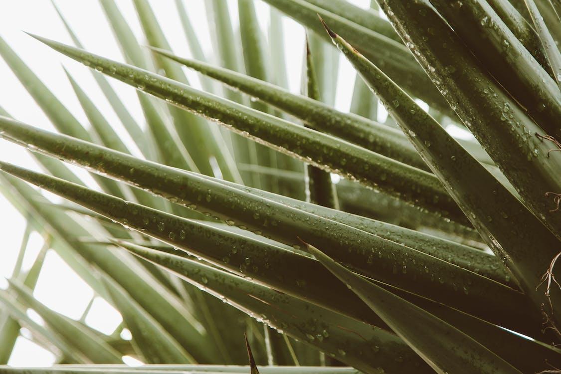 Kostenloses Stock Foto zu abstrakt, agave, aloe