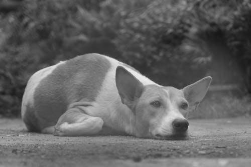 Fotos de stock gratuitas de amante de los perros, animales, fotografía de animales