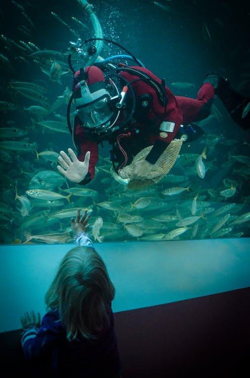 dykker, museum, Nordsjøen