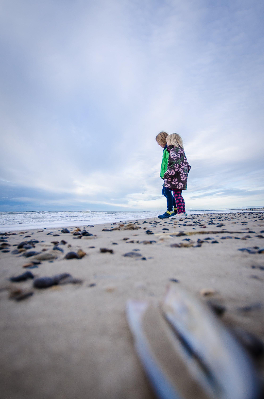 Free stock photo of autumn, beach, sea, siblings