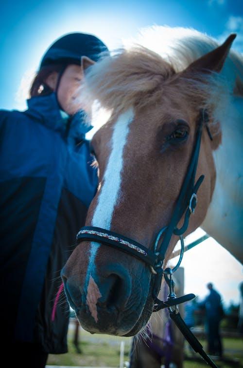 Gratis lagerfoto af hest, pony