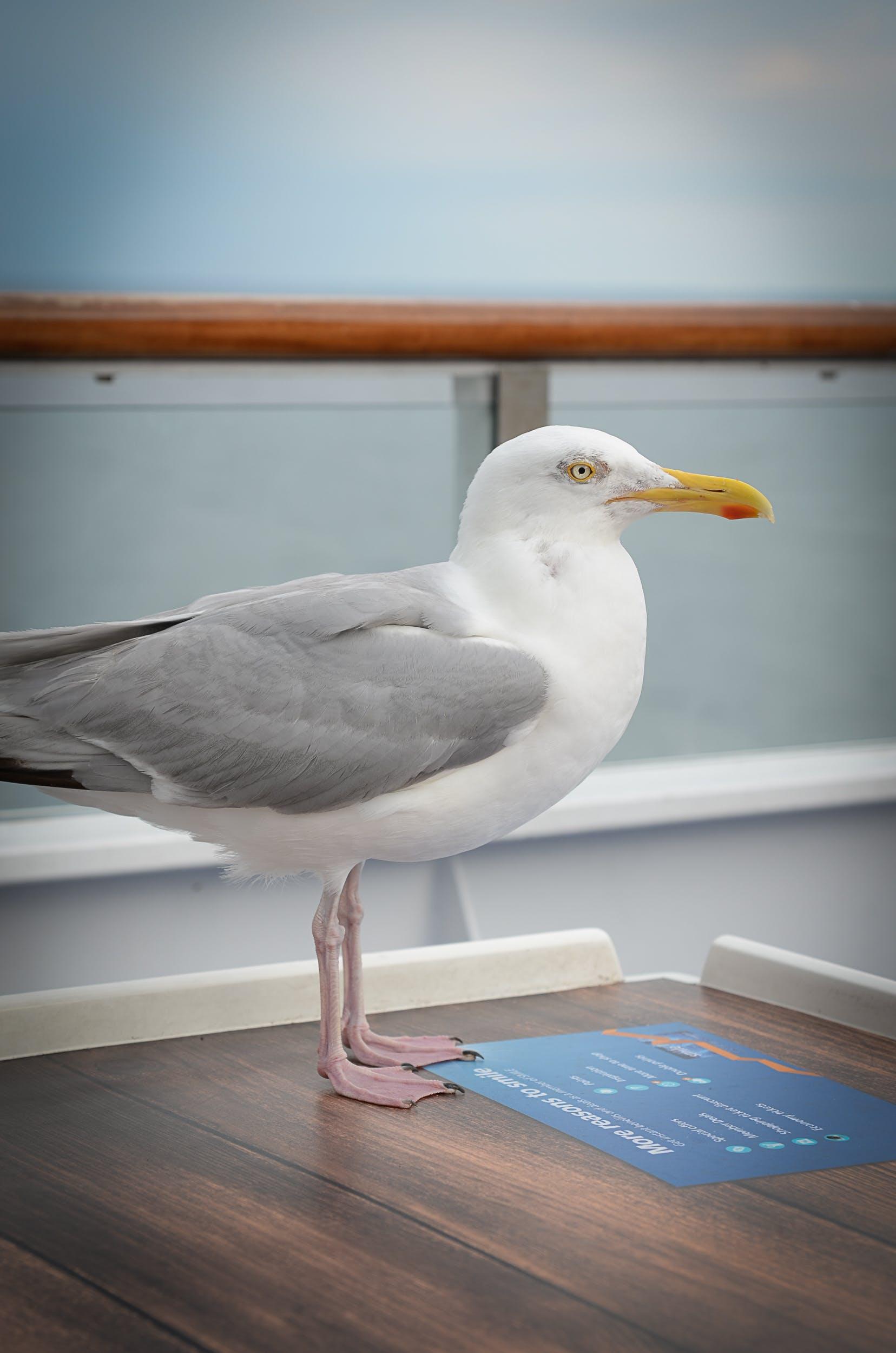 かもめ, ボート, 側面図, 動物の無料の写真素材