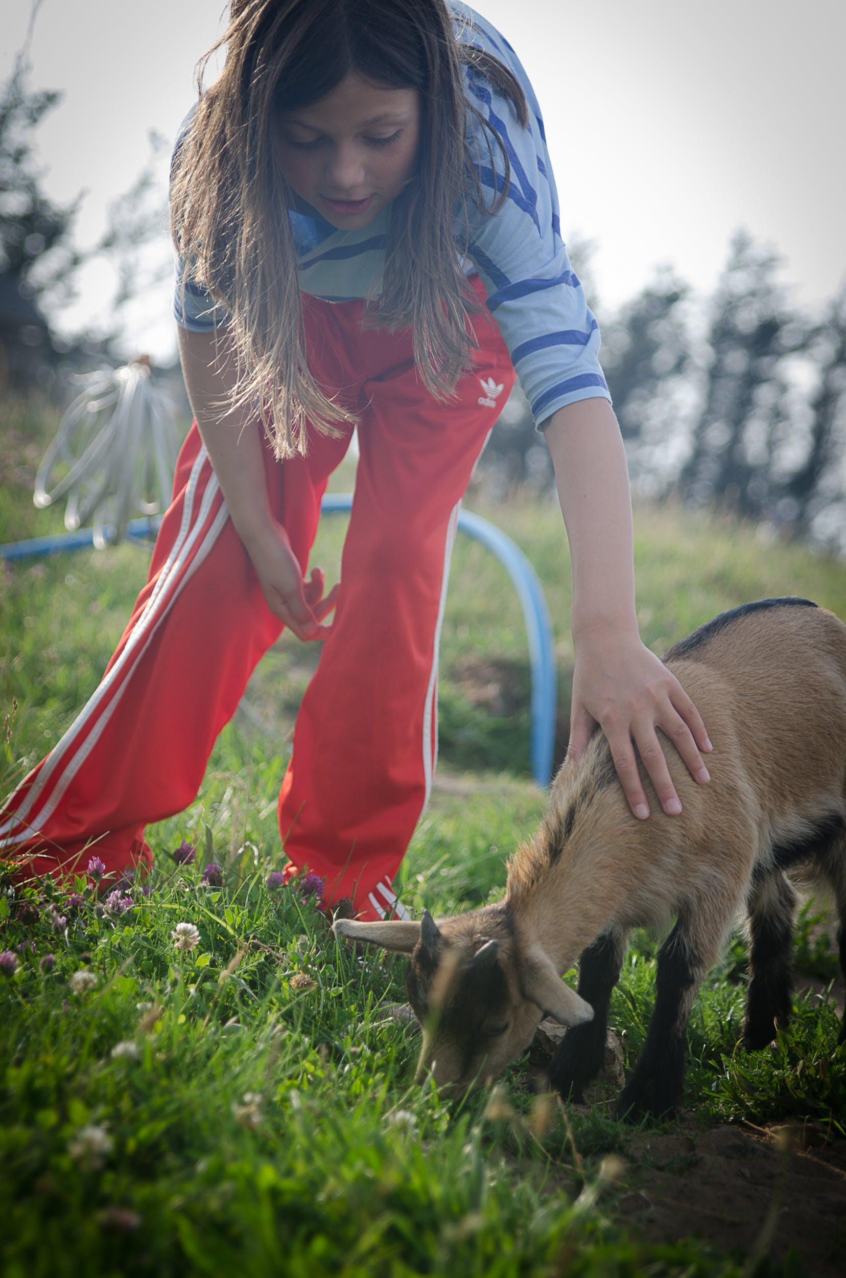 Free stock photo of child, girl, goat, summer