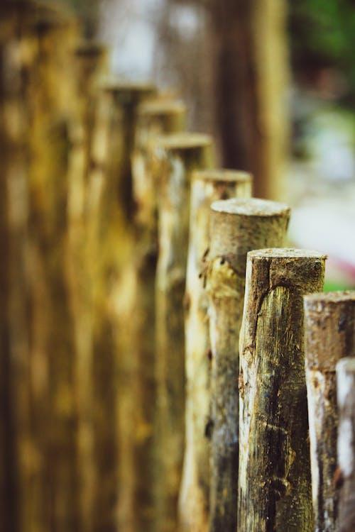 Fotos de stock gratuitas de cerca, madera, naturaleza