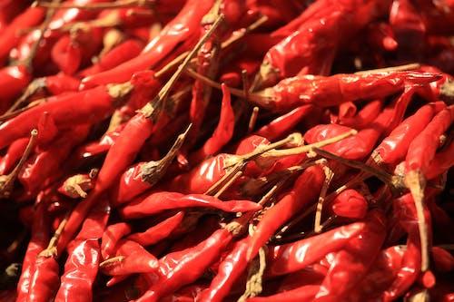 Fotos de stock gratuitas de amante del chile, chile picante, chile seco