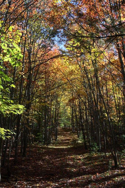 คลังภาพถ่ายฟรี ของ ต้นไม้