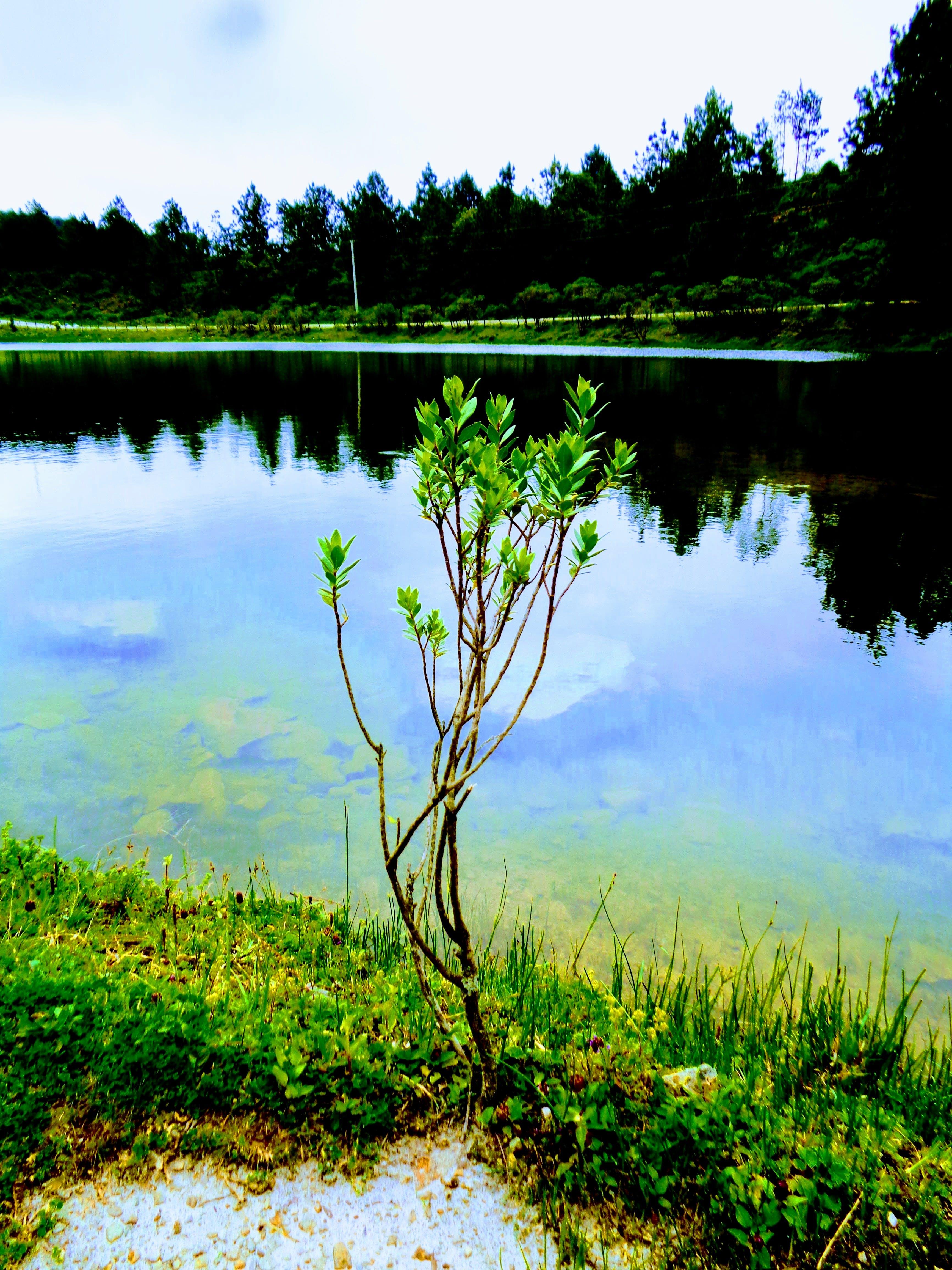 Green Leaf Plant Near Body of Water