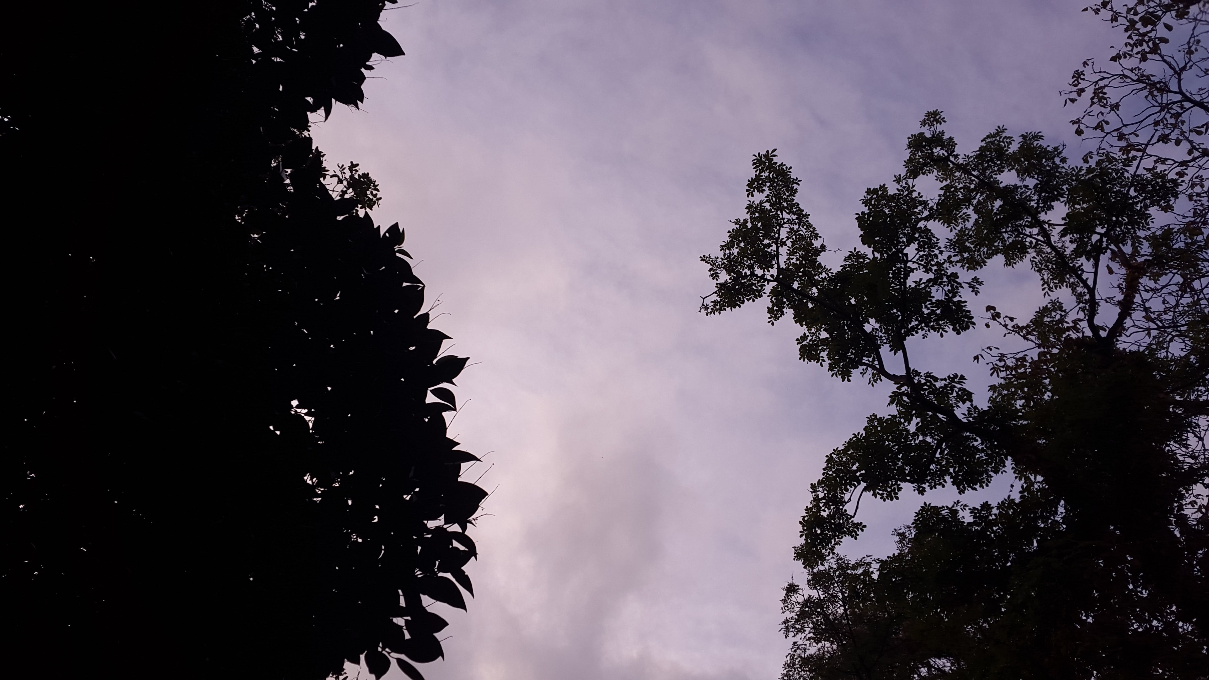 Low Angle Photography of Silhouette of Trees Under Calm Sky