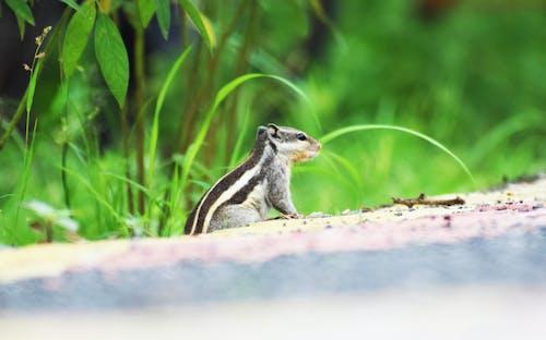 Gratis lagerfoto af close-up, dagslys, dyr, egern