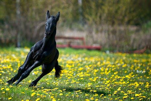 Бесплатное стоковое фото с лошадь, молодое животное, пони