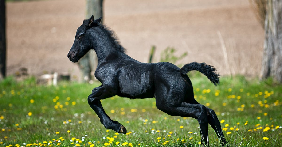 Black Horse Running On Grass Field With Flowers 183 Free