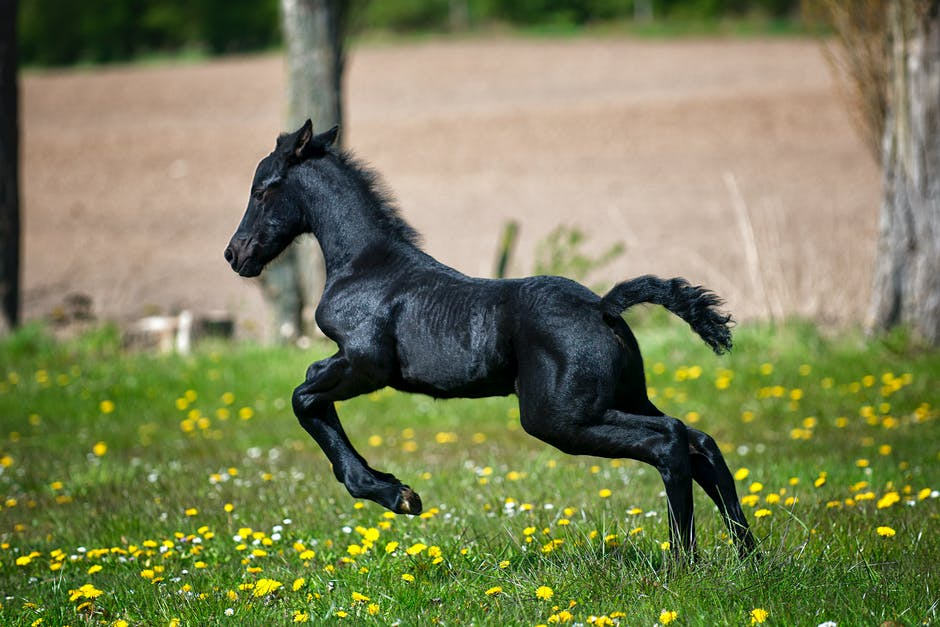 Black Horse Running on Grass Field With Flowers · Free ... - photo#39