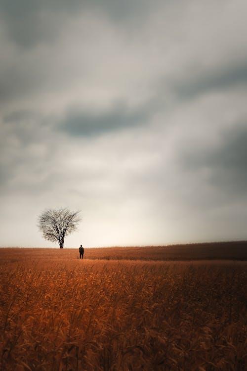 Immagine gratuita di agricolo, agricoltura, alba, albero