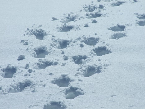 Free stock photo of snow, footsteps