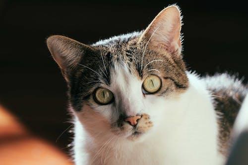 Attentive domestic cat looking at camera