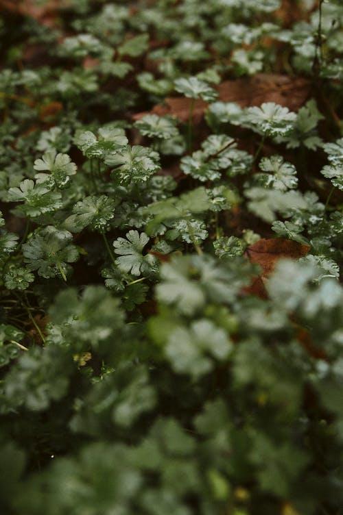 白花與綠葉