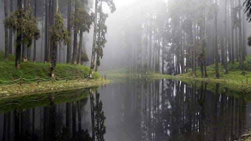 Fotos de stock gratuitas de agua, arboles, césped, con niebla