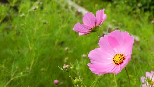 Fotobanka sbezplatnými fotkami na tému divé kvety, divý kvet, kvet
