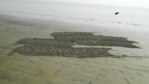 Free stock photo of beach, beach bird