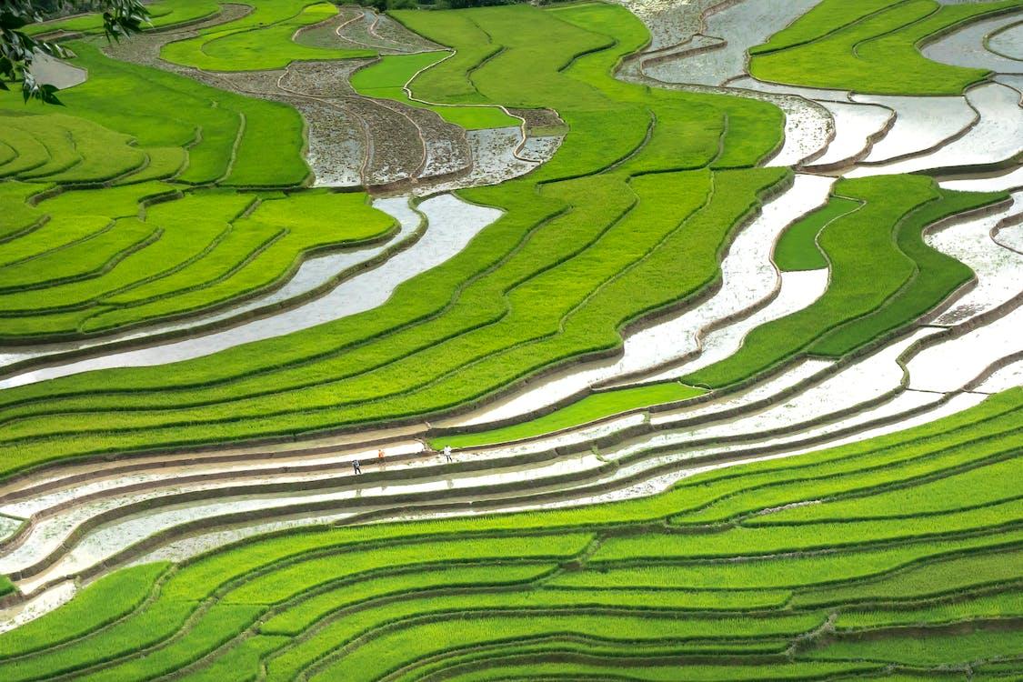 Sa pa, Vietnam, Asia, Campos de arroz