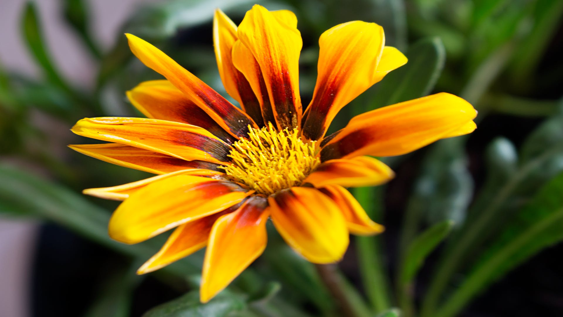 Free stock photo of flower, garden, nature, open