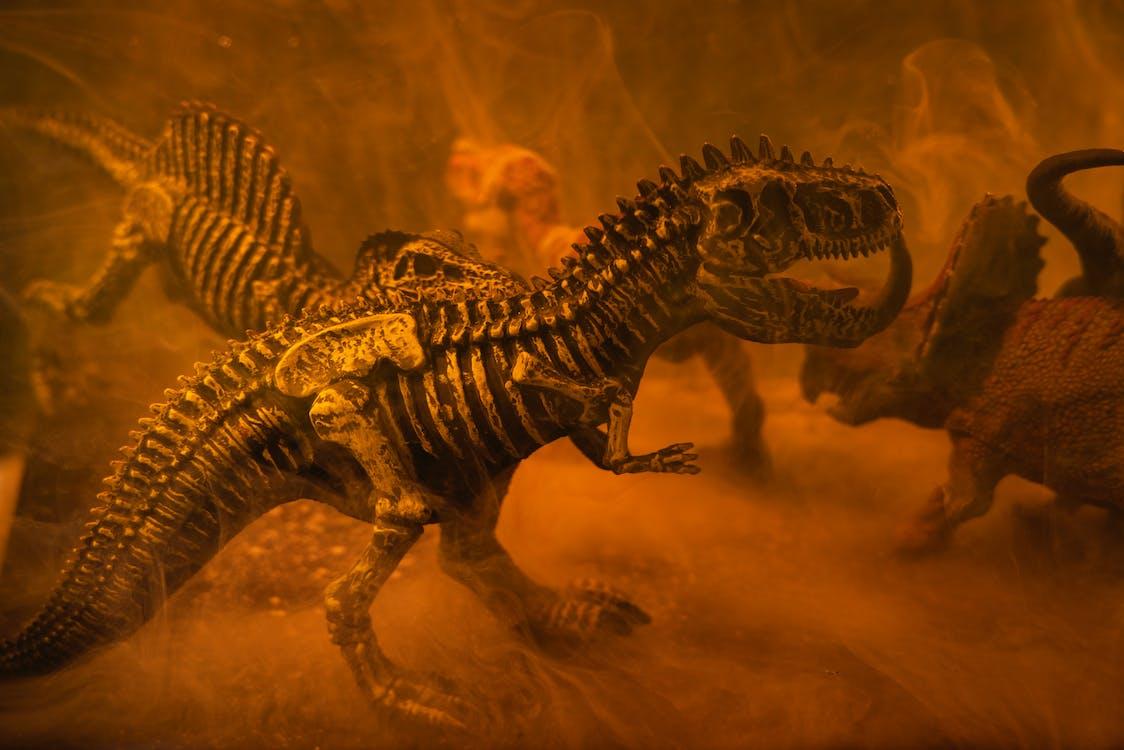 Black and Brown Dinosaur Skeleton