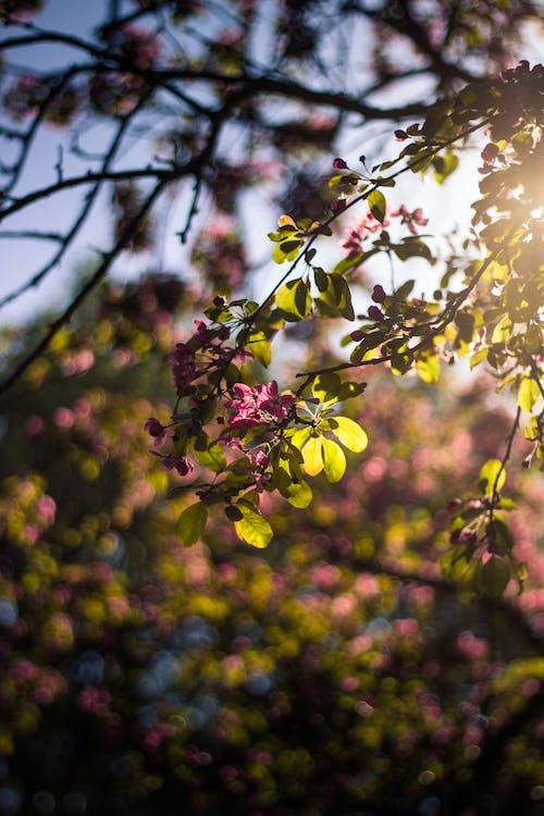Flor De Pétalo Rosa Y Blanco Durante El Día