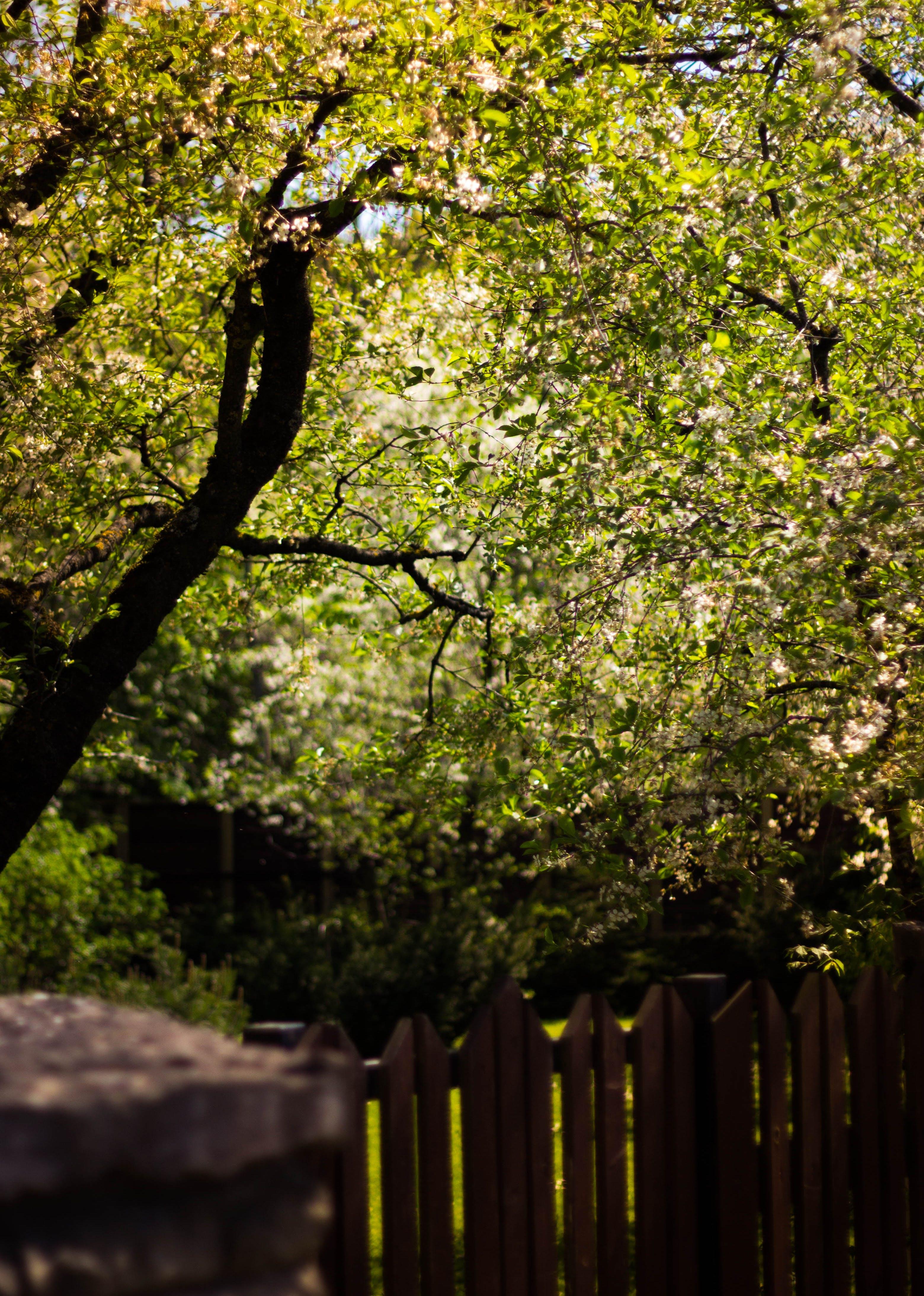 Безкоштовне стокове фото на тему «глибина різкості, дерева, дерево, паркан»