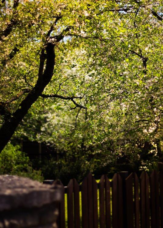 alberi, albero, ostacolo
