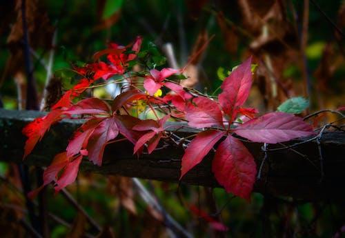 季節, 秋, 秋の色の無料の写真素材