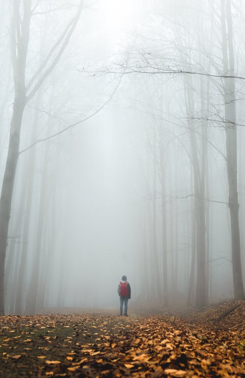Back view of anonymous person in casual clothes with backpack standing on pathway among tall trees placed in foggy autumn forest in daytime