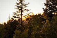 dawn, landscape, nature